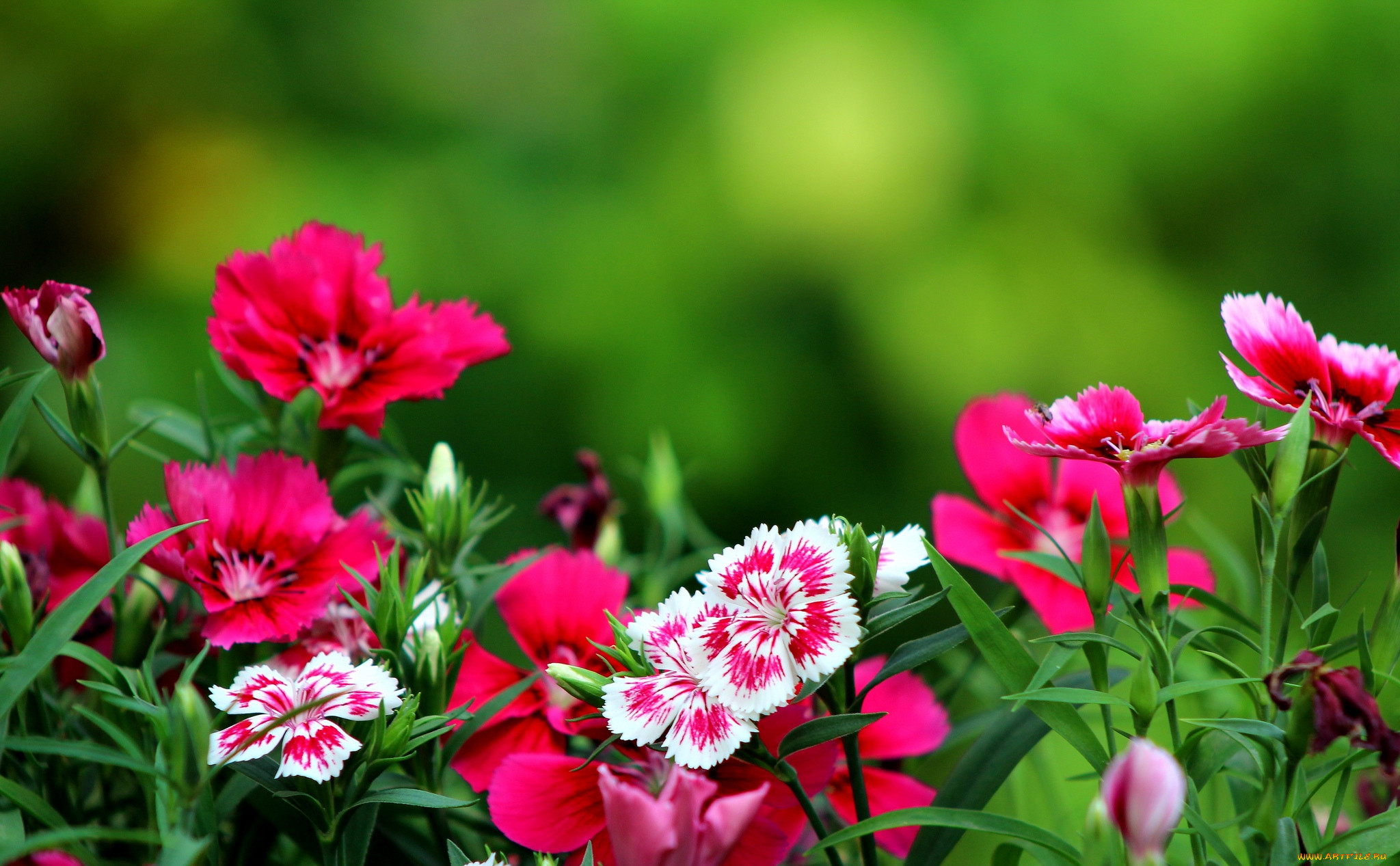 картинка для рабочего стола цветы на столе